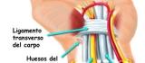 ¿Qué es Síndrome del Túnel Carpiano?